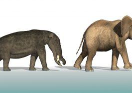 Platybelodon compared to an elephant: Illustration 24591484 © Linda Bucklin | Dreamstime.com