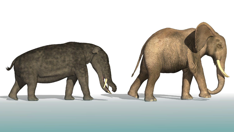Platybelodon compared to an elephant: Illustration 24591484 © Linda Bucklin   Dreamstime.com
