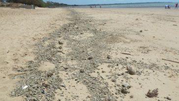 Pumice gravel along the beach at Hervey Bay, photo credit: Tas Walker